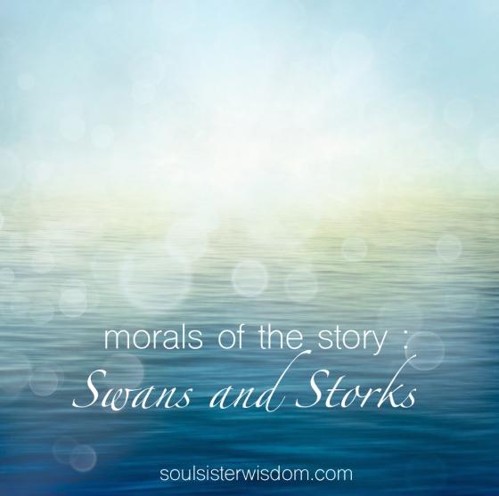 morals - Swans & Storks